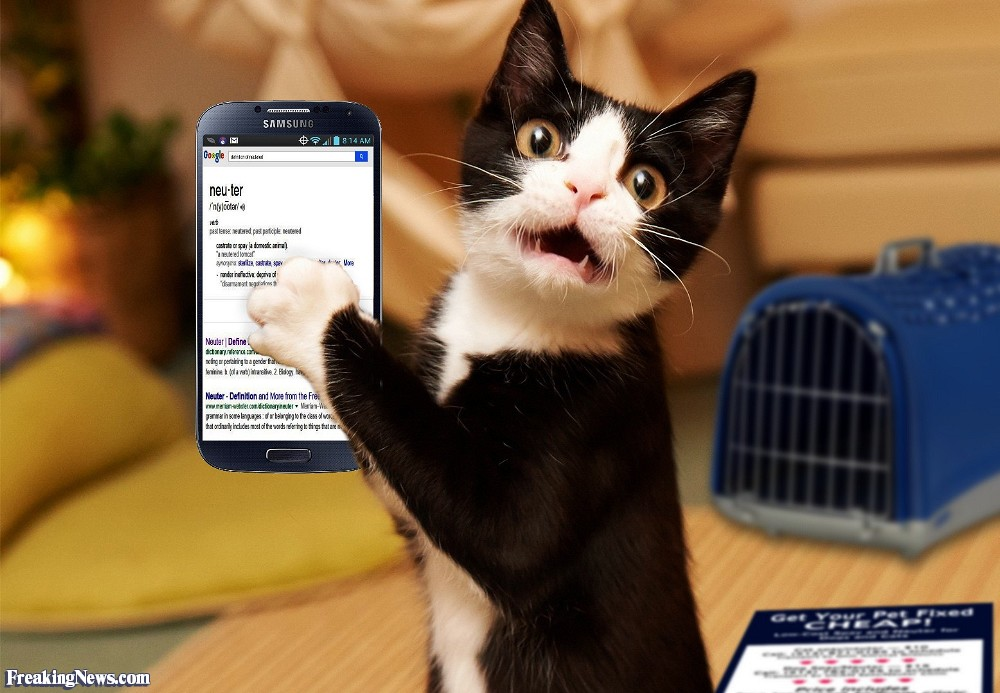 Cat-Using-Google-on-a-Cell-Phone-118007